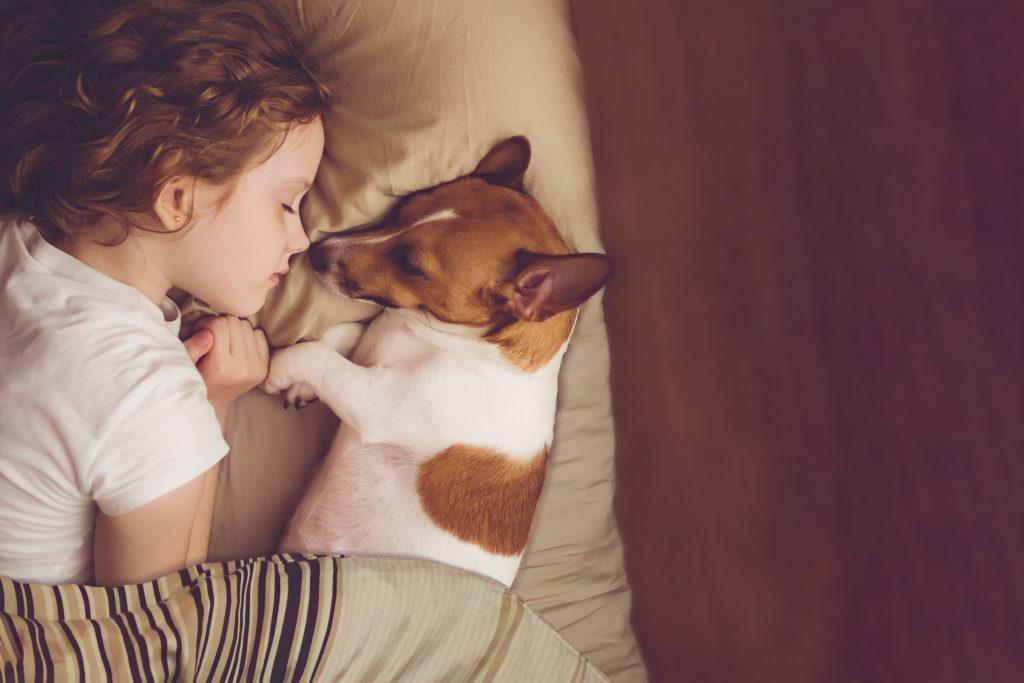 mädchen schläft mit jack russell terrier