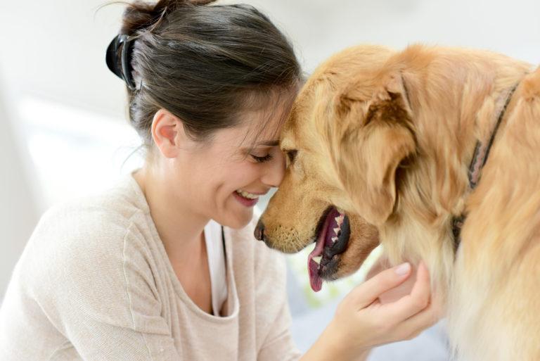 10 dinge bevor einen hund adoptieren