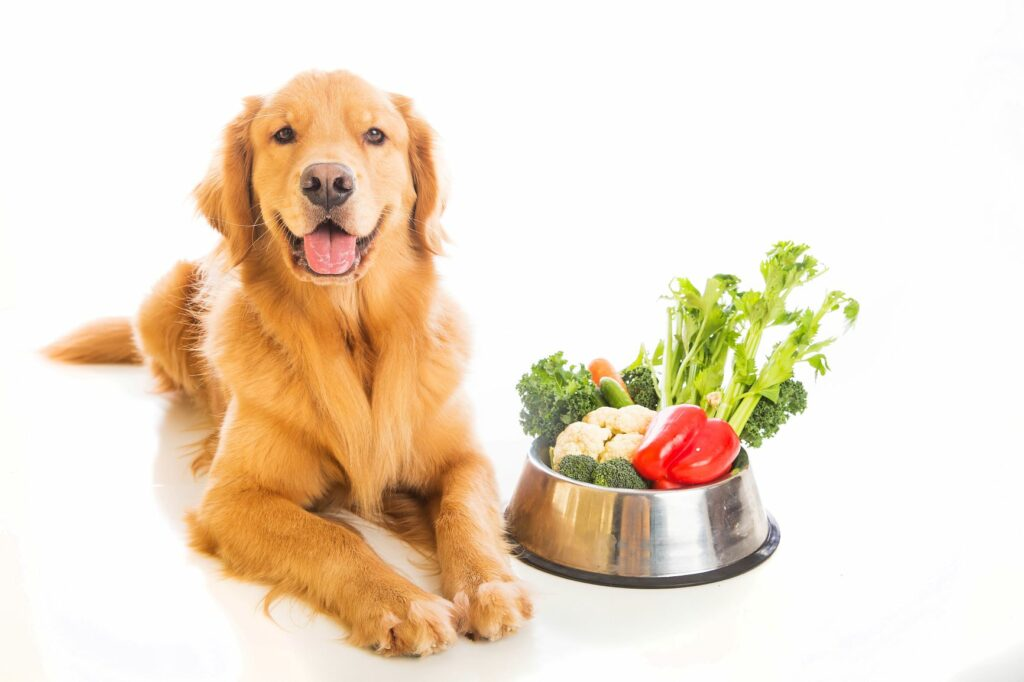 Golden Retriever mit Fressnapf voller Gemüse