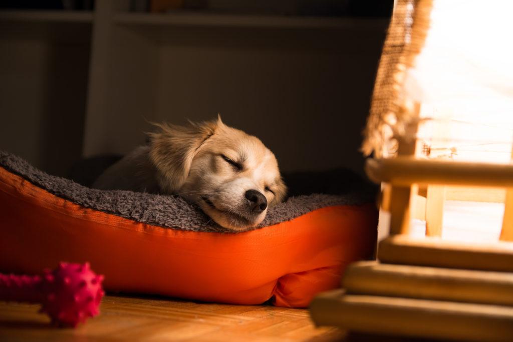 hund schläft