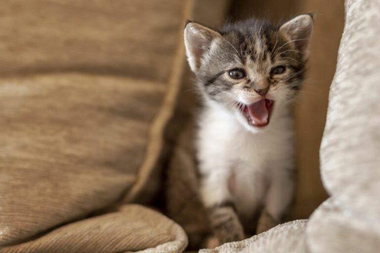 Katzen schlafmittel für 11 pflanzliche