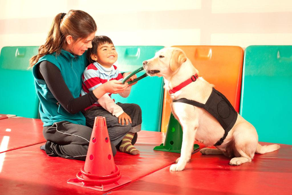 labrador therapiehund mit kind
