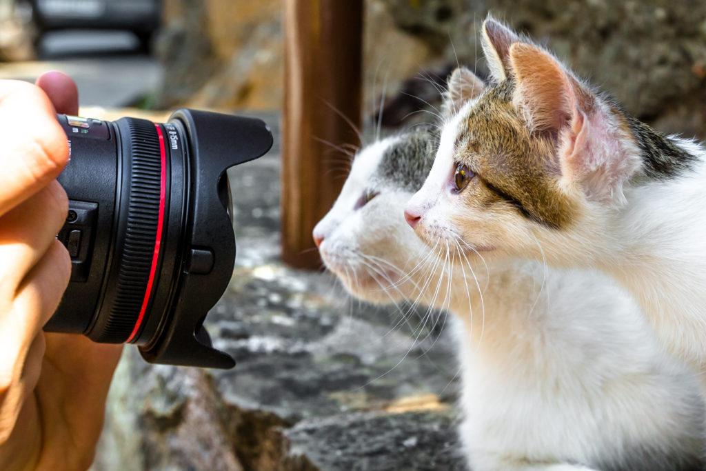 zwei Katze fotographiert