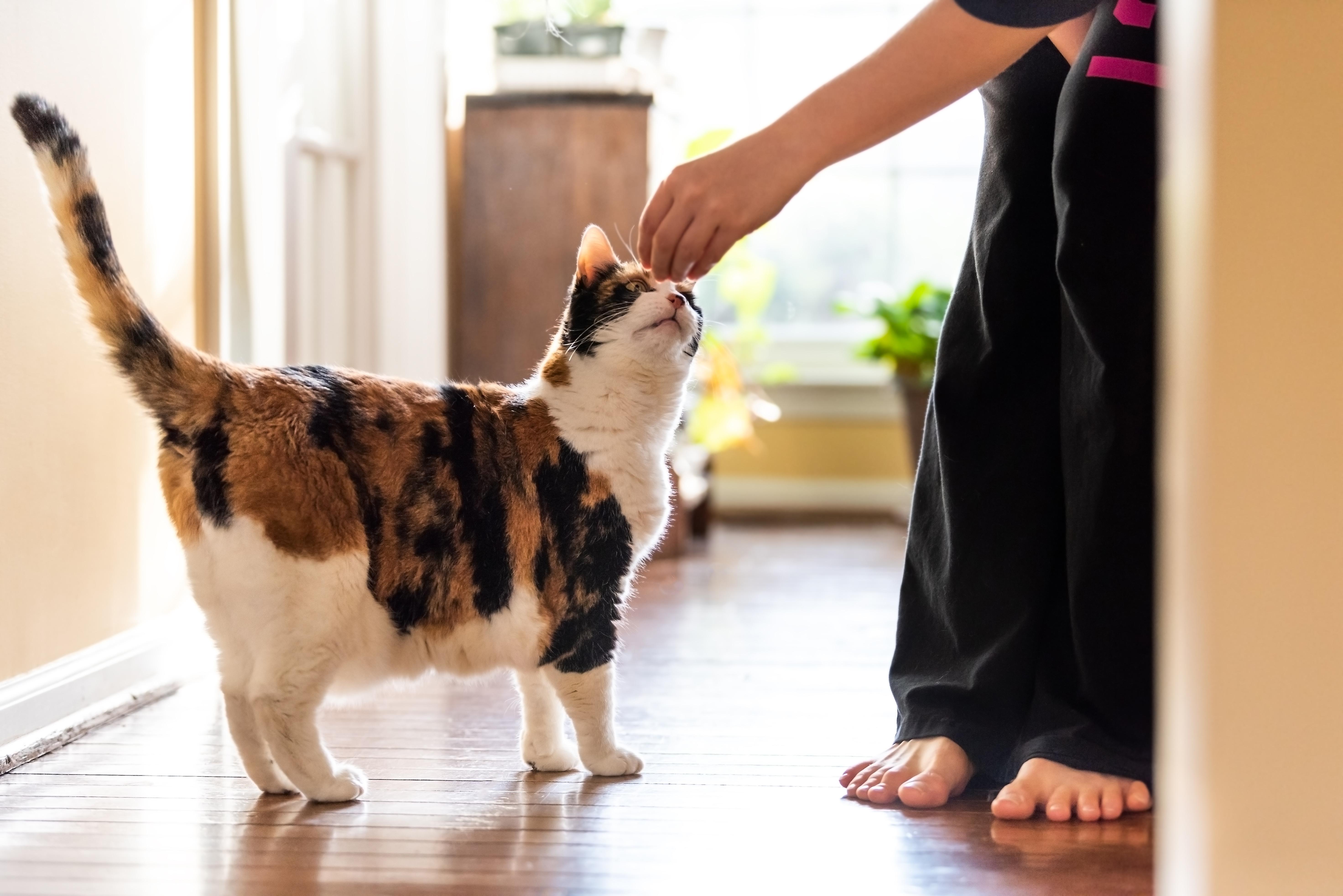 Clickertraining mit Katzen Wie funktioniert das   zooplus