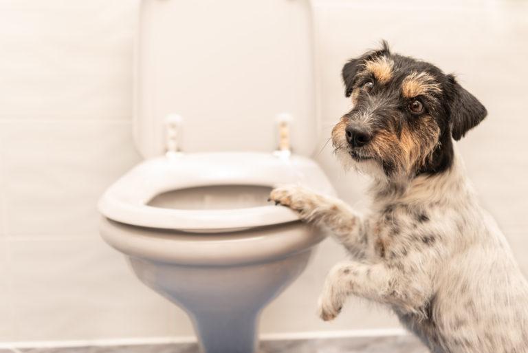 hund folgt mir auf die toilette