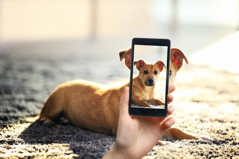 Hund wird mit dem Handy fotografiert
