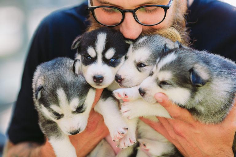 12 Fragen An Hundezuchter Beim Welpenkauf Zooplus