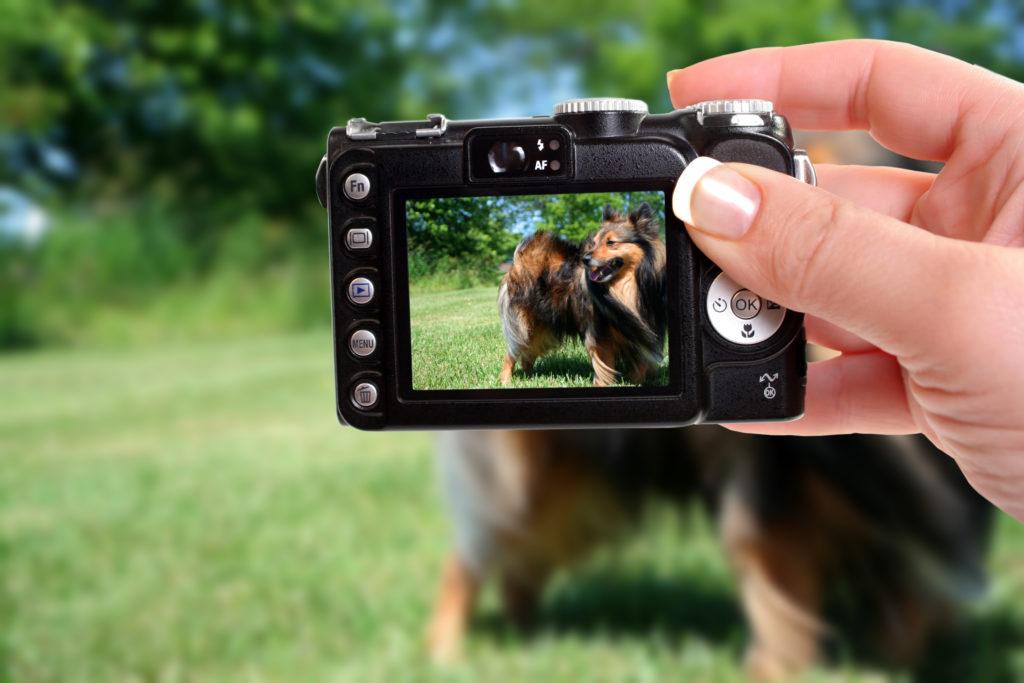 Hund wird mit der Kamera fotografiert