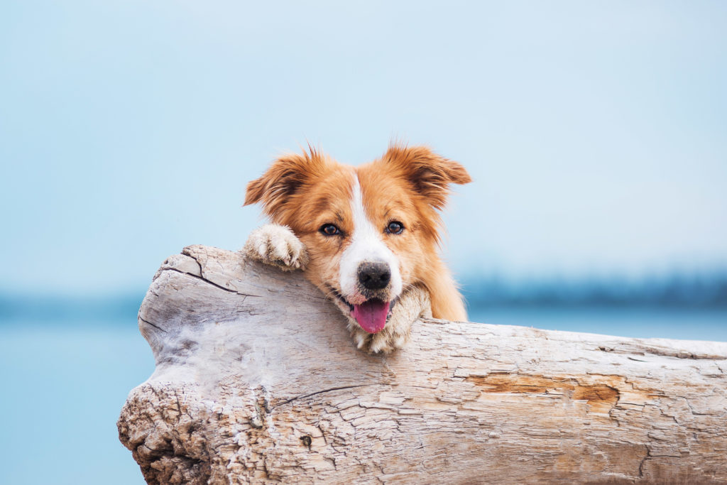 Praias para cães em Portugal: encontre os melhores lugares para umas excelentes féris com o seu patudo