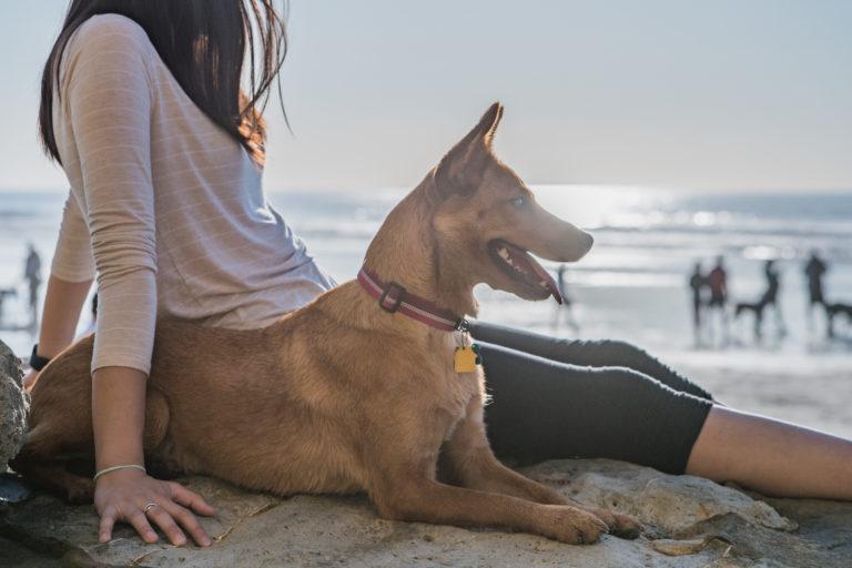 hund mit frau am strand