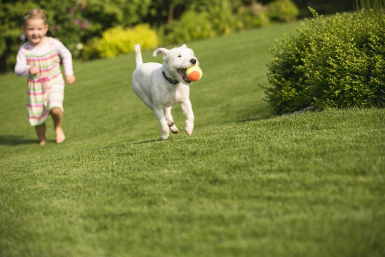hund mit kind im grass