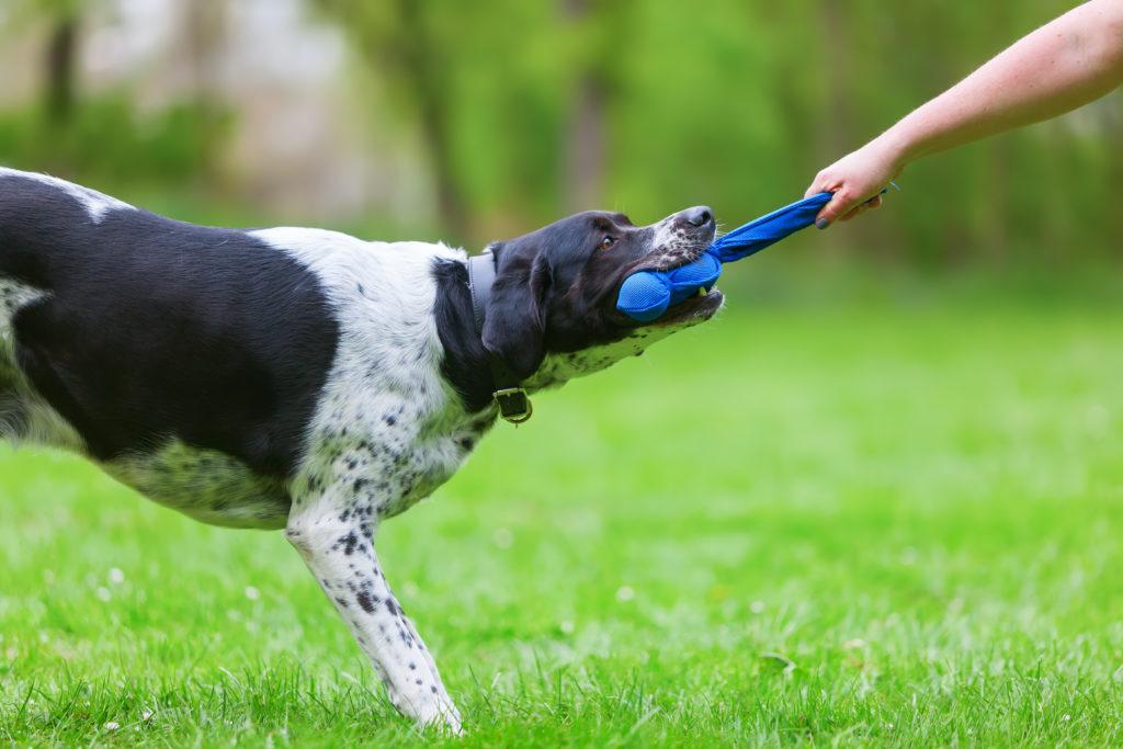 hundetrainer mit hund