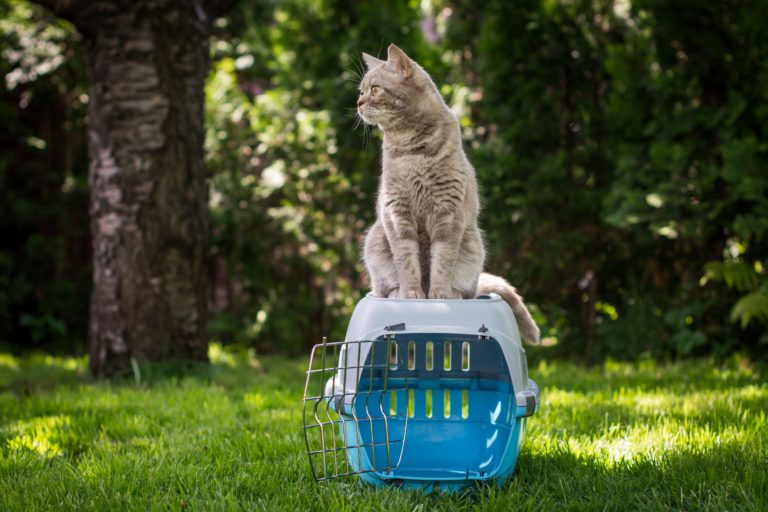 Cat on pet carrier in the grass