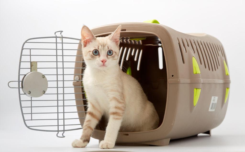 kitten im transportbox