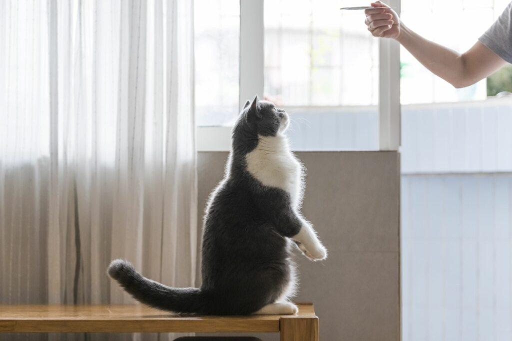 Clickertraining mit der Katze