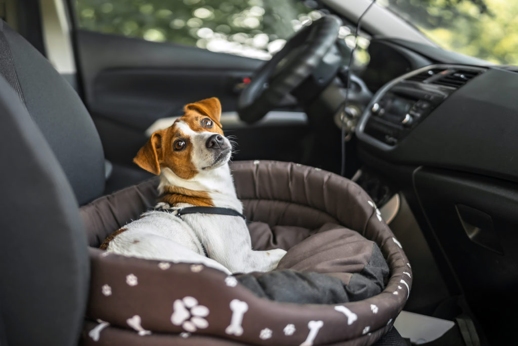 jack russell hundebett im auto