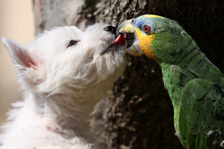westie hund mit papagei
