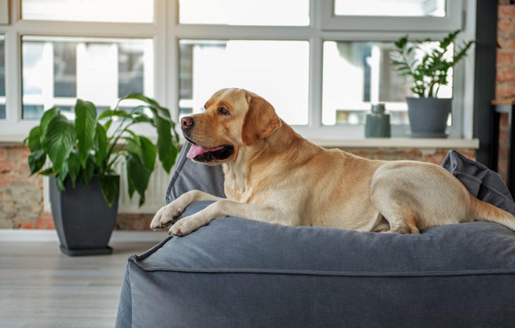 hund auf orthopädisches hundebett