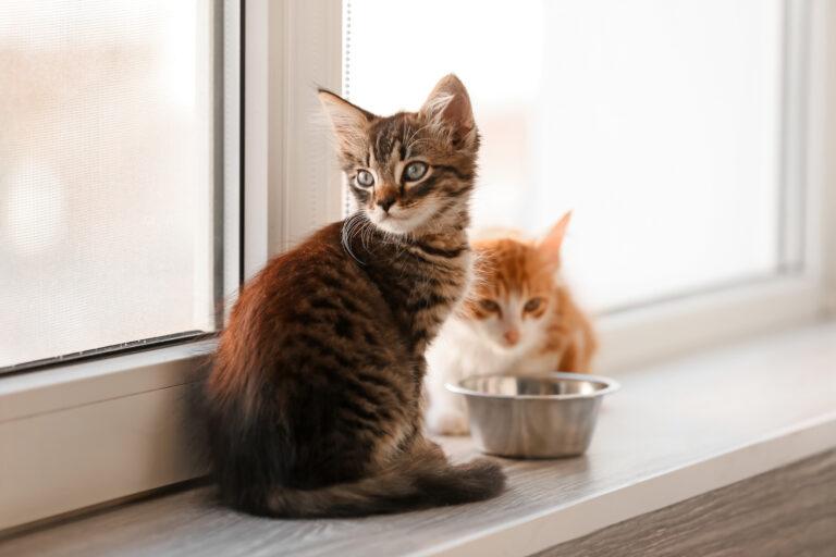 ab wann geben kätzchen kittenfutter