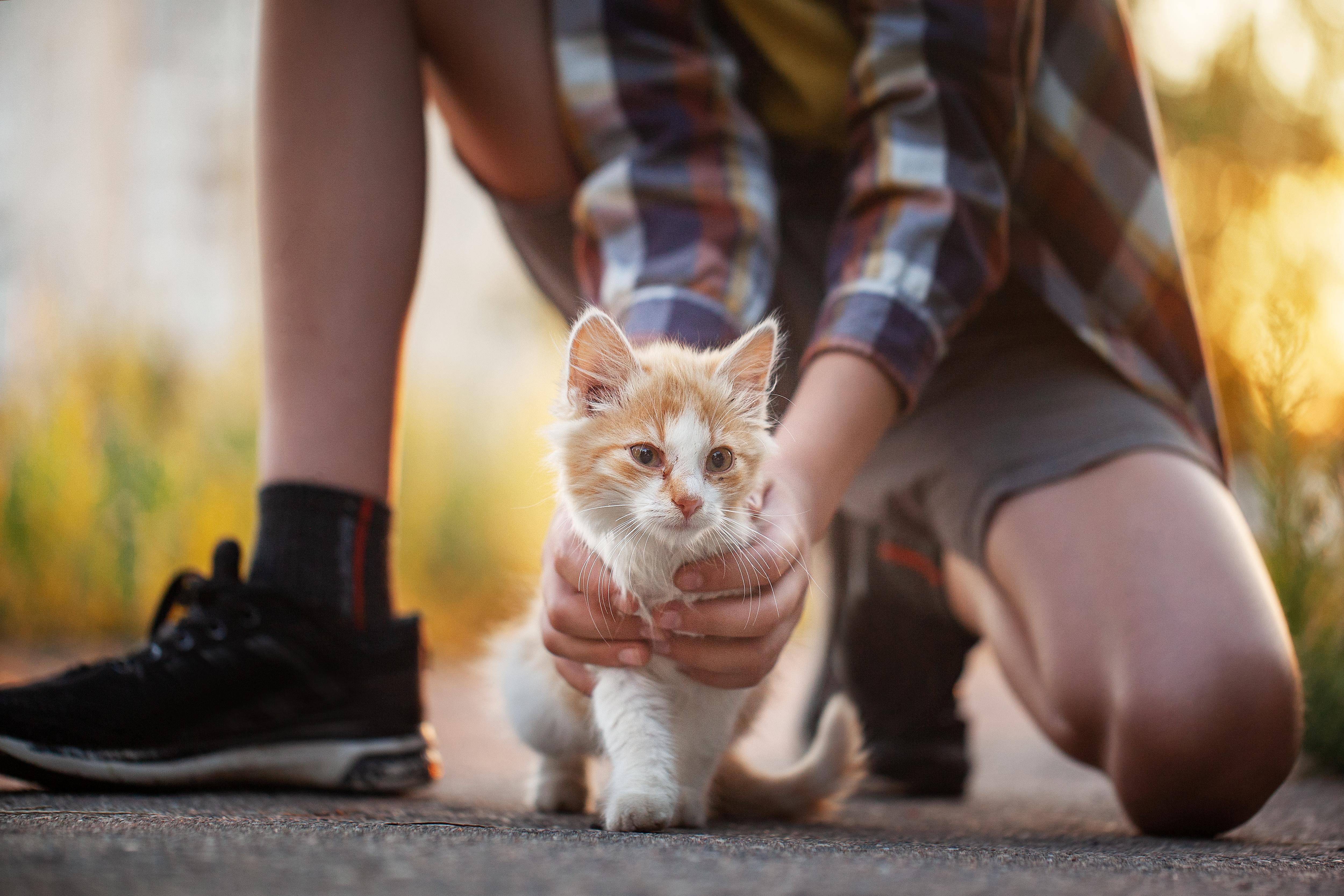 rote kitten zugelaufen
