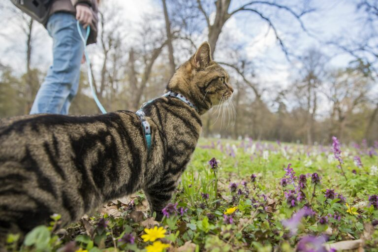Leinentraining mit der Katze