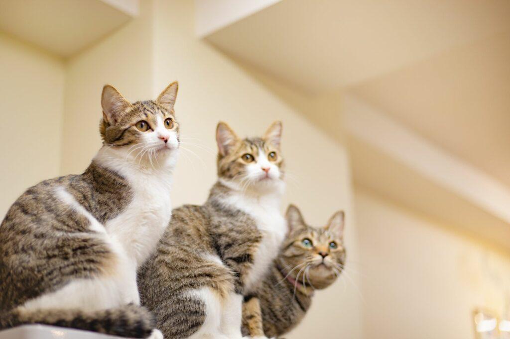 giardia bei katzen