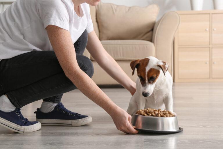 Hundeernährung bei Krankheiten