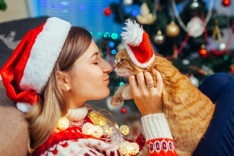 Weihnachtsgeschenke Ideen für Katzen