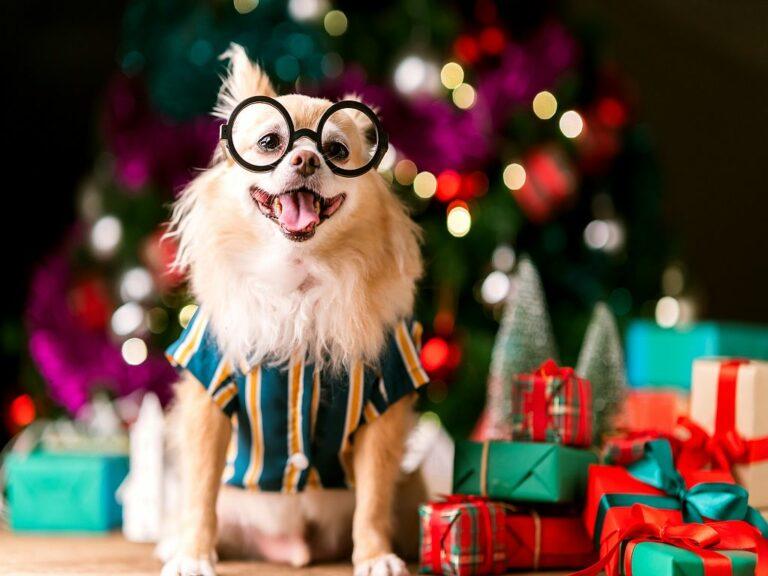 Weihnachtsgeschenke Ideen für Hunde
