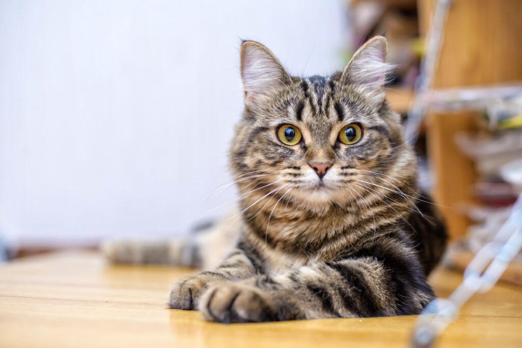 Giardien katze behandlung, Giardien bei katzen behandeln - Giardien bei katzen behandeln