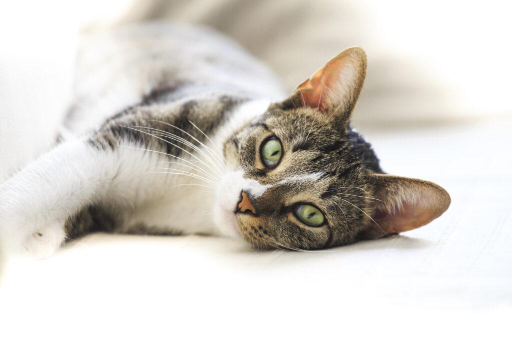 Allergie bei Katzen: Arten, Symptome & Behandlung