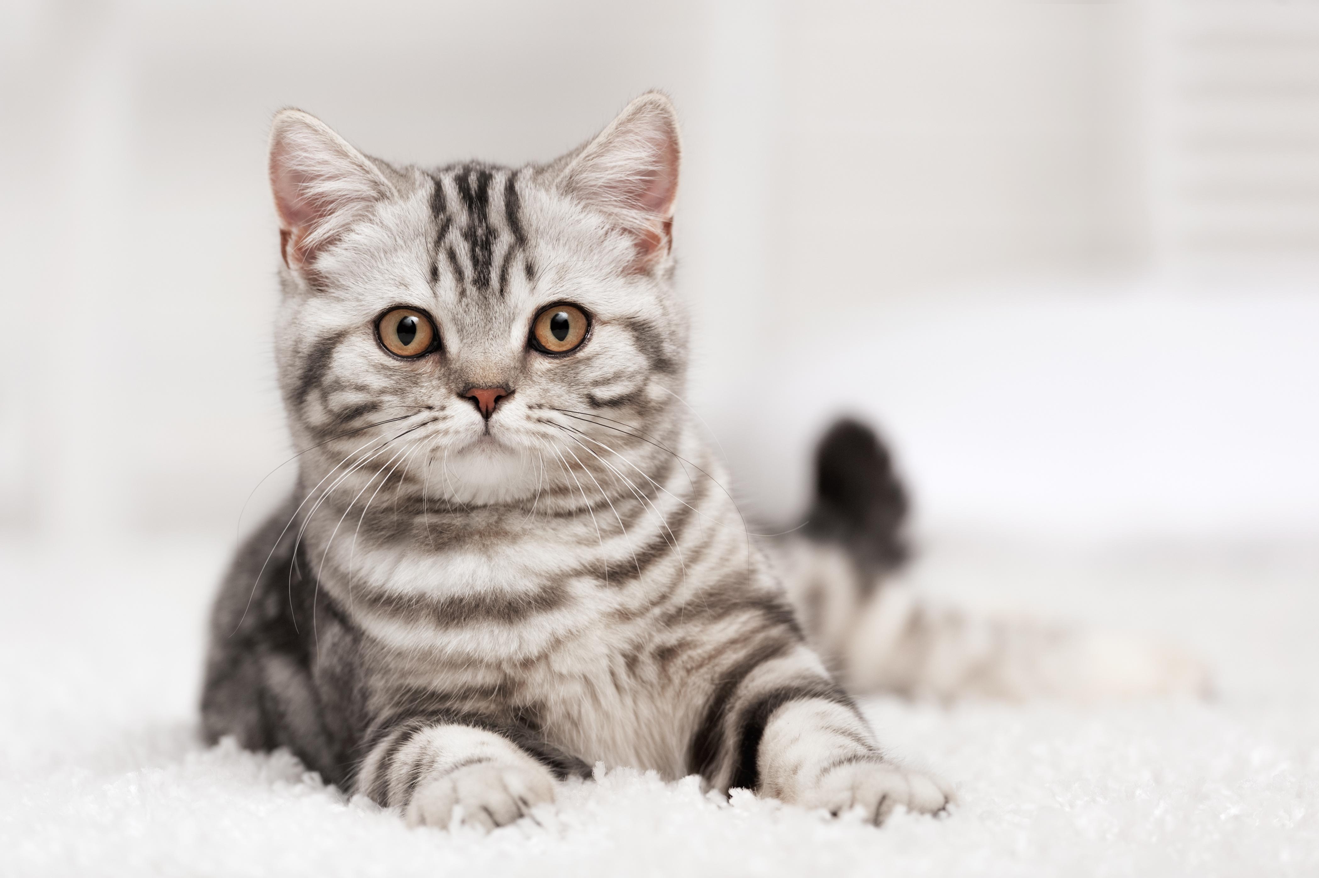 Husten Bei Katzen Ursachen Symptome Behandlung
