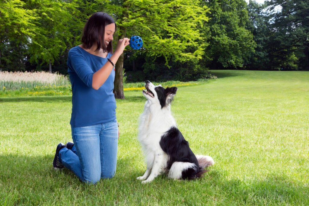 lære hund apportering