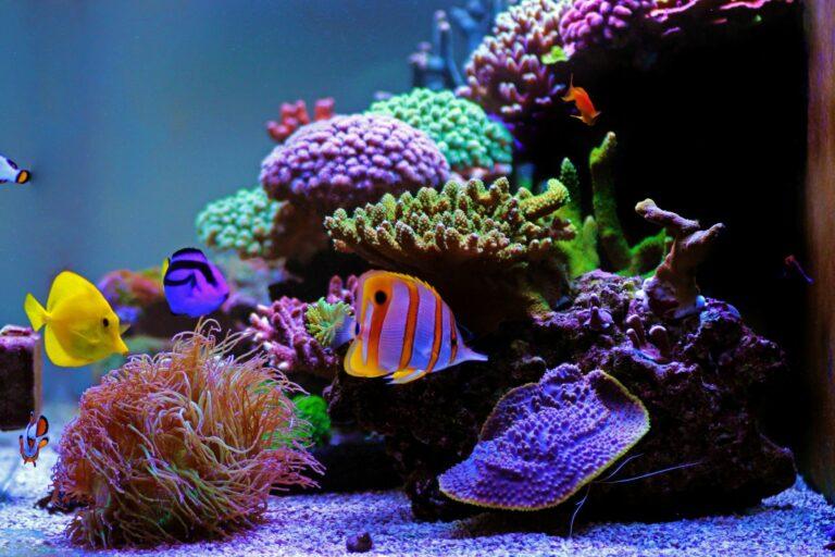 Verschiedene Salzwasserfische im Aquarium