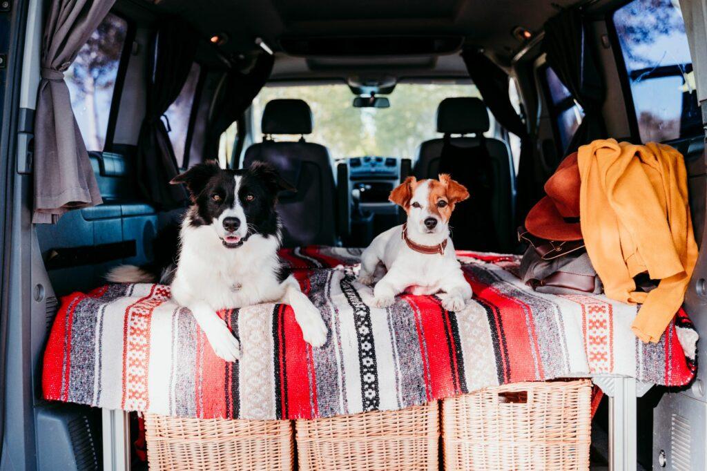 Camping mit Hunden