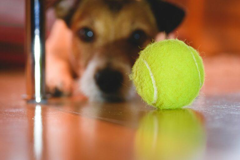 tennisball gefährlich für hunde