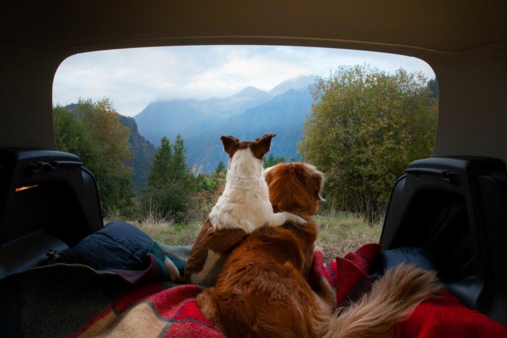 Camping mit zwei Hunden