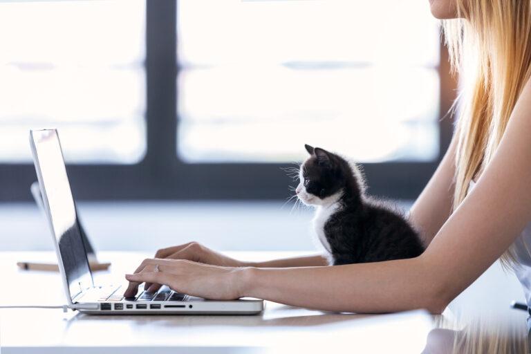 Frau arbeitet mit Laptop und Kitten