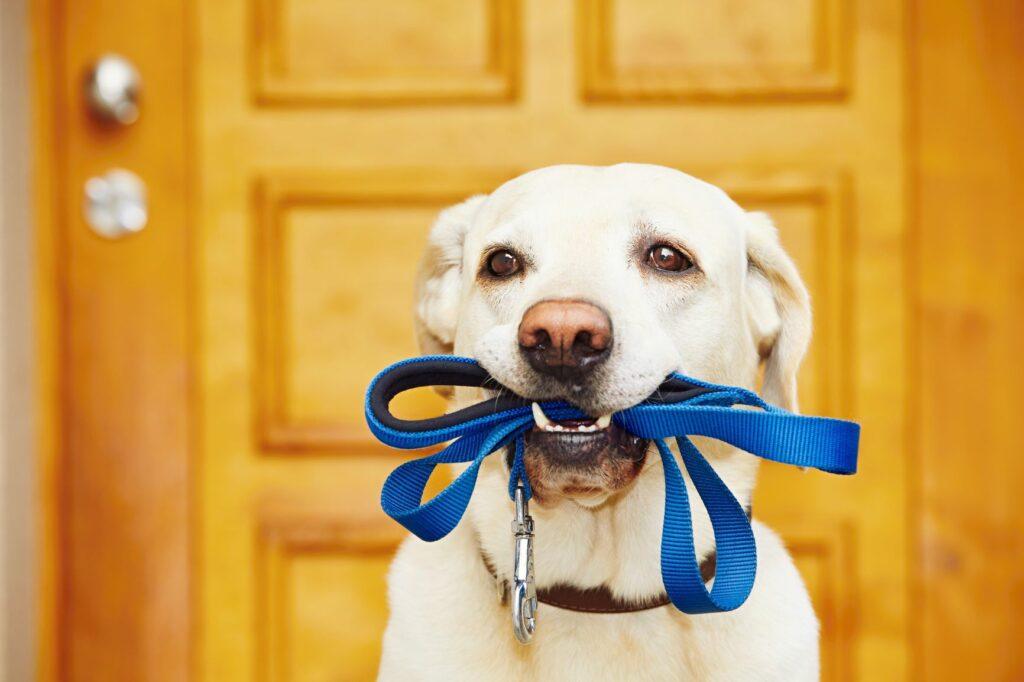 Ein Hund hat eine Leine im Maul