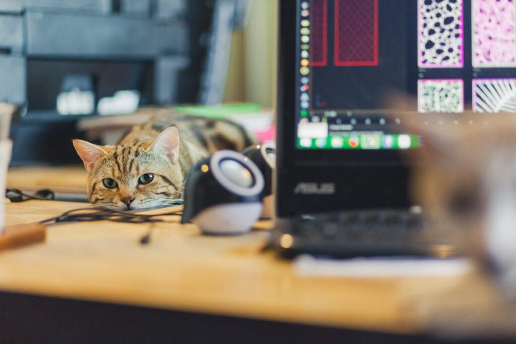 Arbeiten zu Hause mit Ihrer Katze