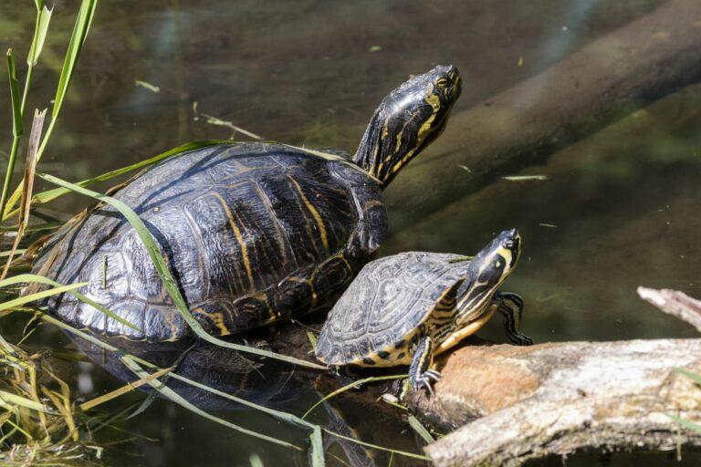 Wasserschildkröte ernährung