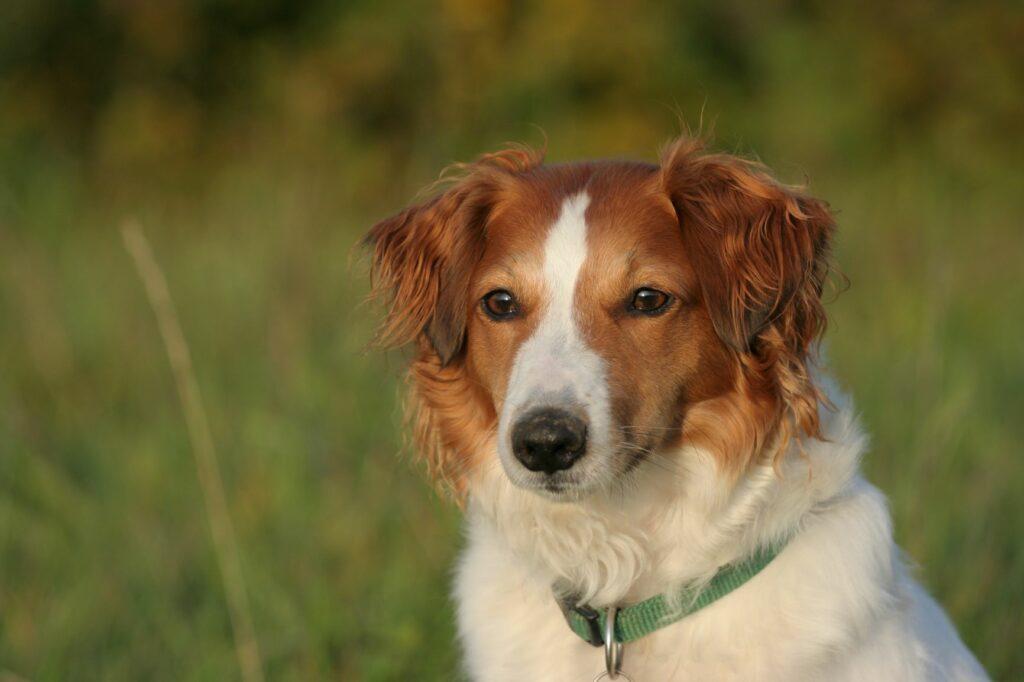 Hund auf einer Wiese in der Abendsonne.