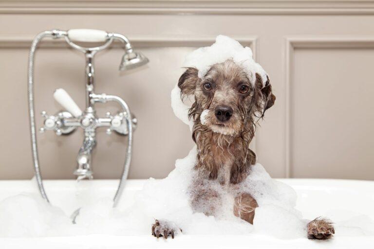 Hund baden in einer Badewanne
