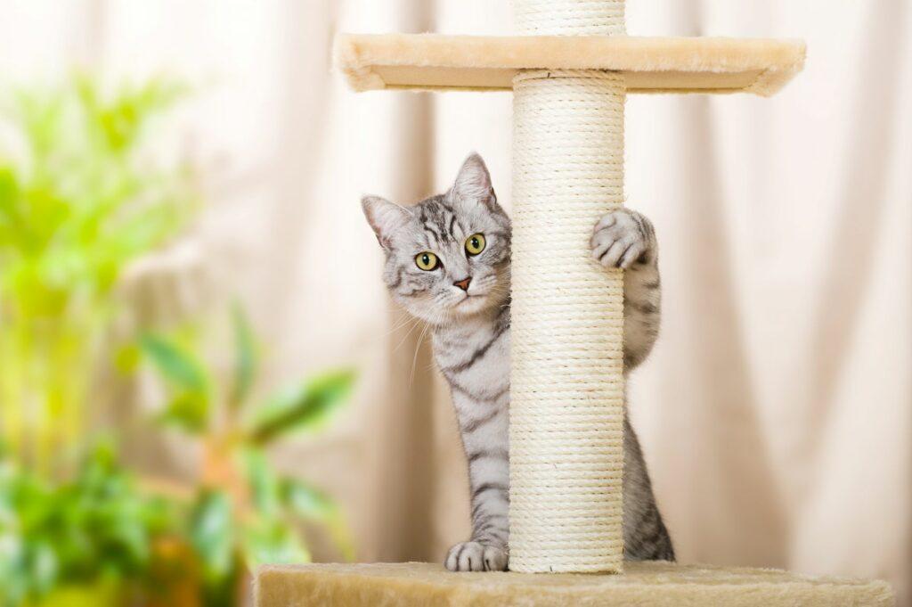 Ein Kätzchen sitzt auf einem Kratzbaum.