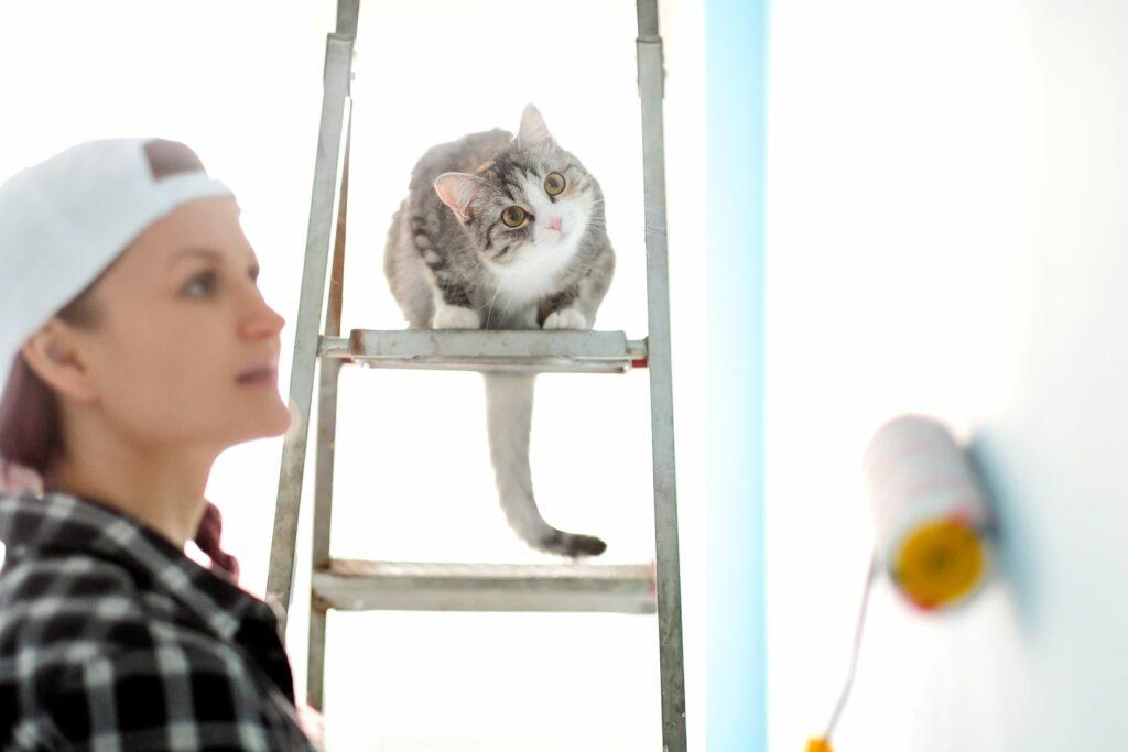 Frau streicht eine Wand und eine Katze sieht zu.