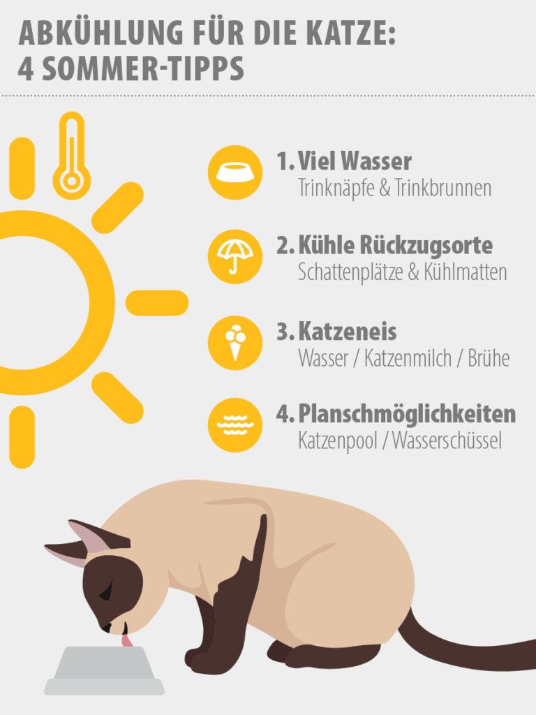 Infografik Tipps Abkühlung für Katzen