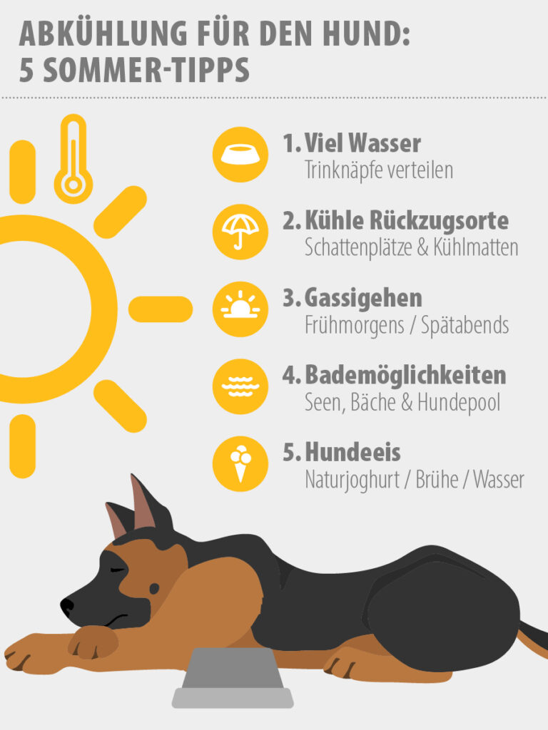 Infografik Tipps Abkühlung für Hunde