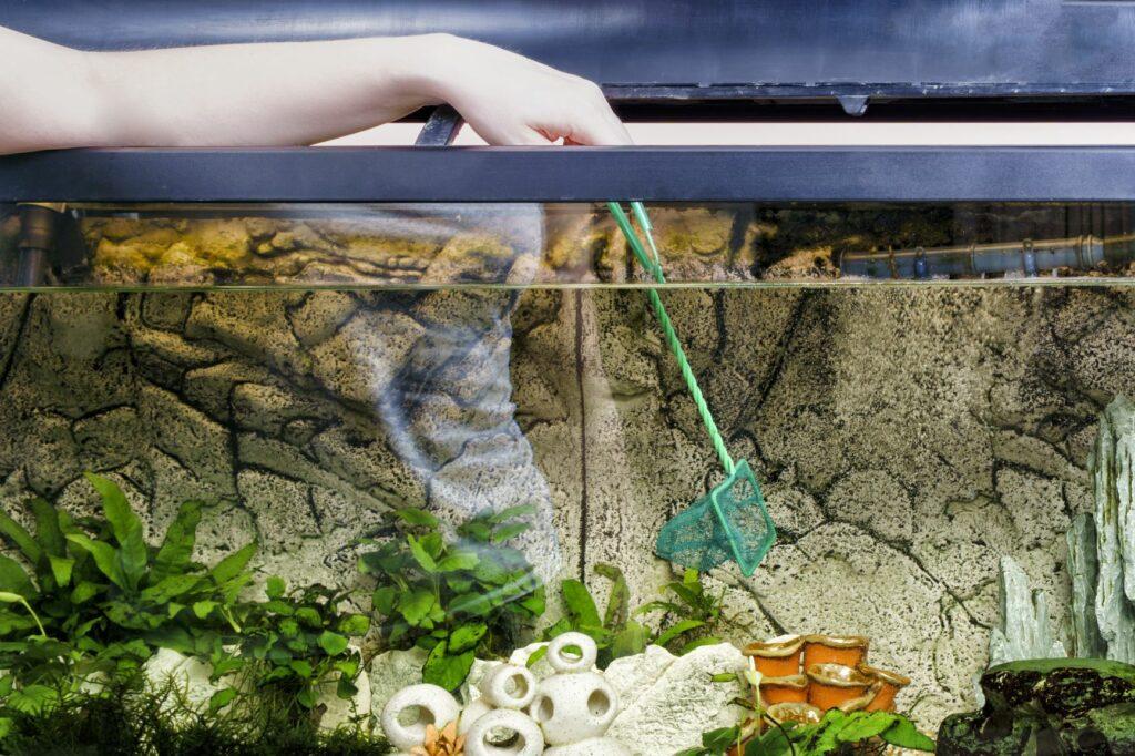 Hand mit einem Kescher im Aquarium