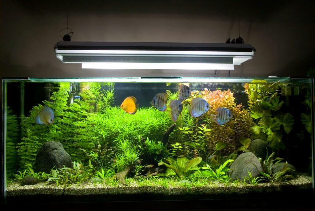 Große Lampe hängt über einem Aquarium
