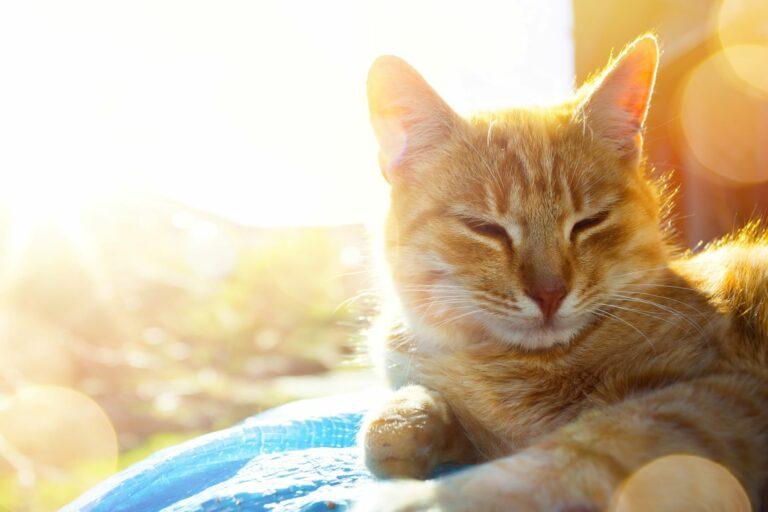 Katze legt auf einer Decke.